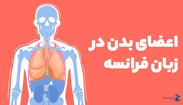 اعضای بدن در زبان فرانسه